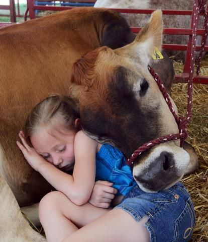 """""""I love you, cow"""" """"I love you too, tiny human."""" i think animals are 100 time more kind hearted then us humans."""
