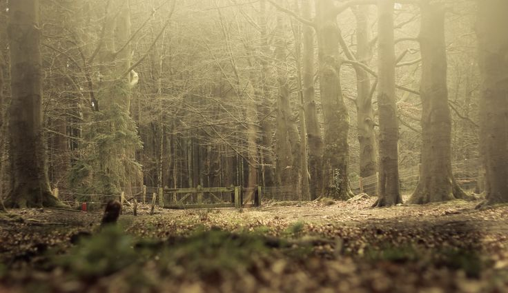 Self made photo - Veluwe