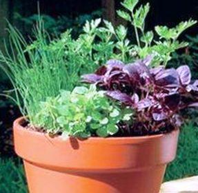 Вырастить зелень в домашних условиях