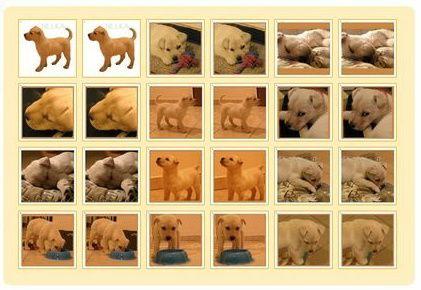 Nelka - môj psík ✴ http://www.pexeso.net/en/nelka/04FCA