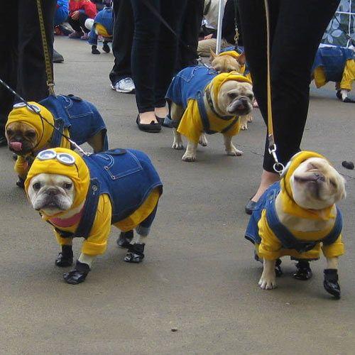 French Bulldog Minions...