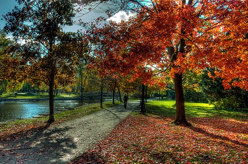 Walking at Victoria Park  and the red leaves , Kitchener , Canada