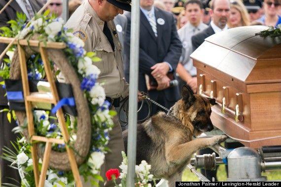 Police Dog Figo pays last respects to his fallen partner, Officer Jason Ellis. Breaks my heart...