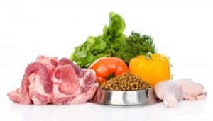 Diet for Dogs wtih Canine Pancreatitis