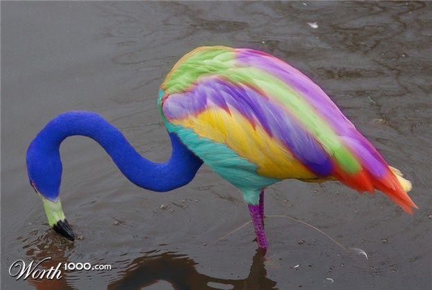 rainbow flamingo | ... color magic!) flamingo | Rainbow ...