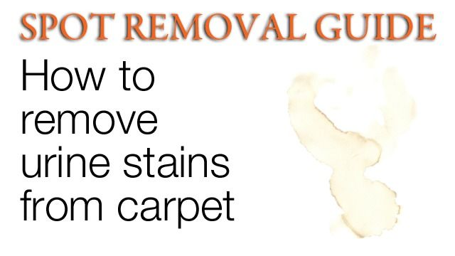 How To Get Urine Stains Out Of Carpet Removing Urine