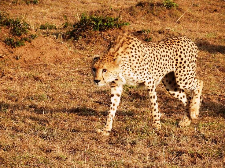 10 Reasons To Visit Magical Kenya | The Tiny Taster