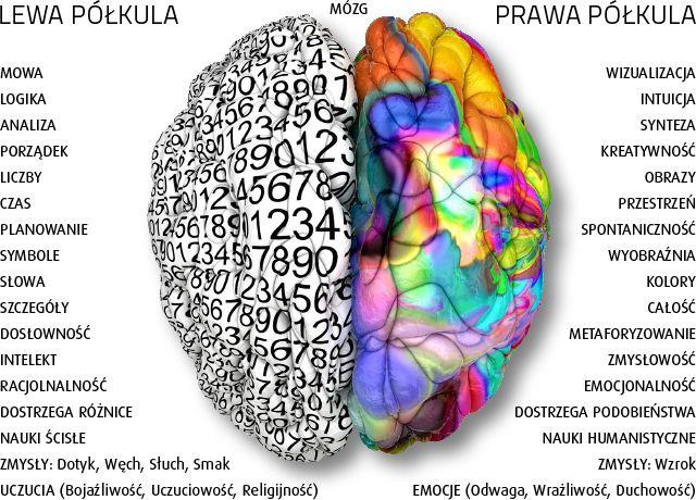 Lateralizacja funkcji półkul mózgowych