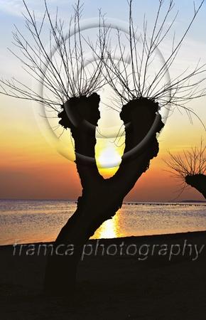 Willow  framcaphotography.com