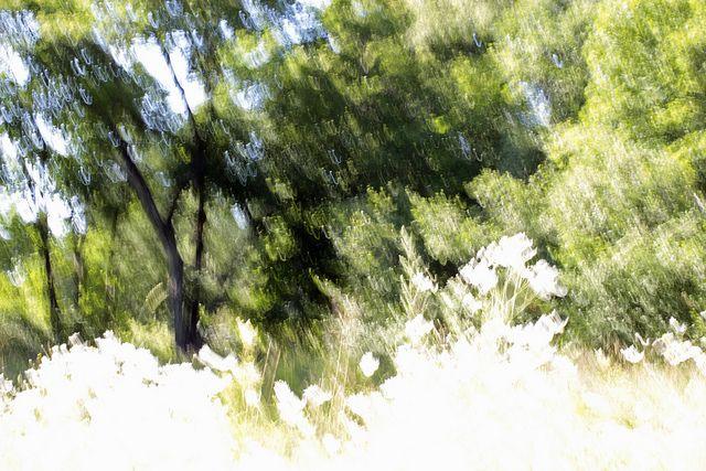 The joy of daisies / (c) Minna Autio