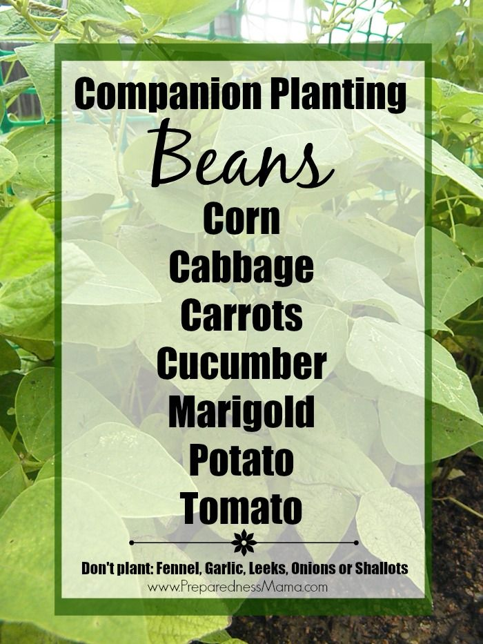 panion Planting Basics Gardening Ve ablesGardening TipsContainer