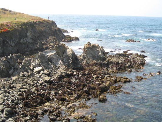 Things to Do in Fort Bragg, California: See TripAdvisor's 3,498 traveler reviews and photos of Fort Bragg tourist attractions. Find what to do today, this weekend, or in March. We have reviews of the best places to see in Fort Bragg. Visit top-rated & must-see attractions.