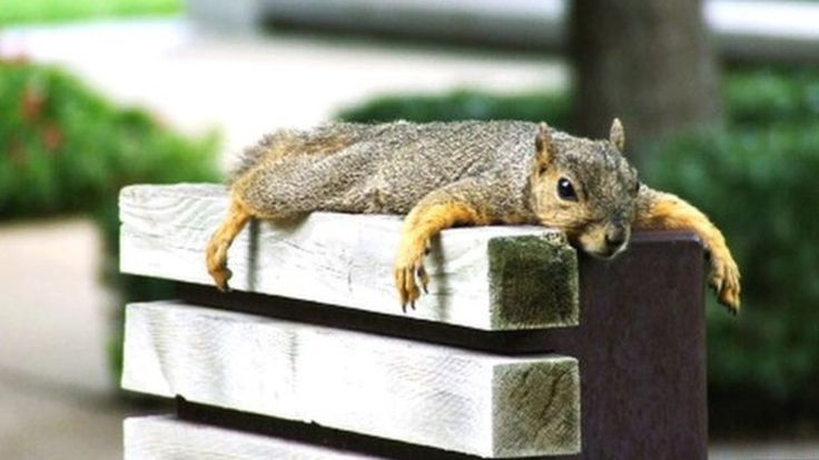 A 'drunk' squirrel turns beer taps on, opens bags of crisps and smashes glasses at a private members' club.