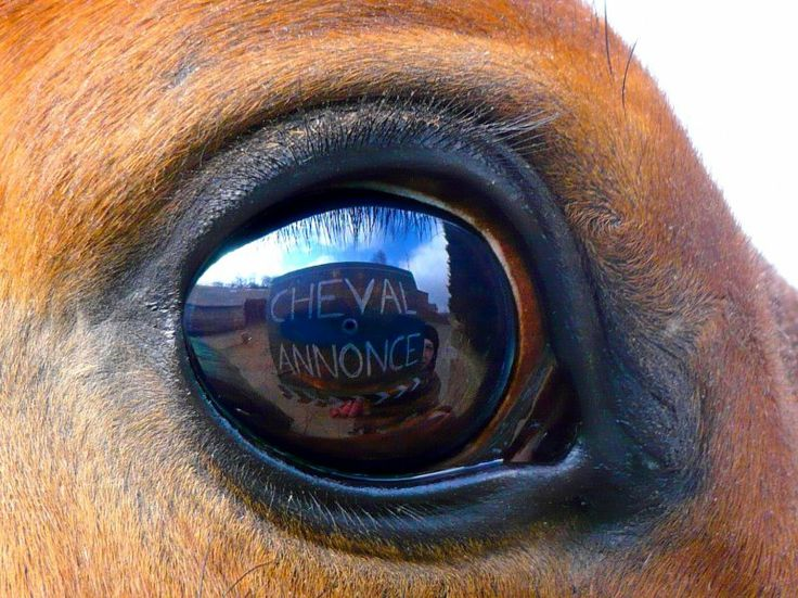 Regardez moi dans les yeux ! #chevalannonce #concours #equitation