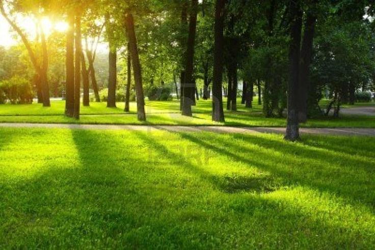 Het jaarbeursplein wordt wel groener, door wat bomen toe te voegen aan het plein. Maar waarom zijn er geen toekomst plannen om er een park(je) in/van te maken. Dan stijgt de waarde van groen in dit gebied meteen.