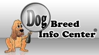Basic Feeding Guide for Dogs, How much should I feed my dog?