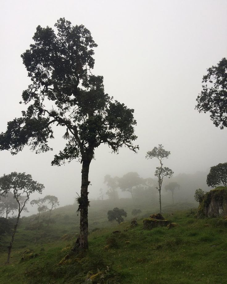 #EnMiColombia #JGGHtrip #Nature #NoFilter