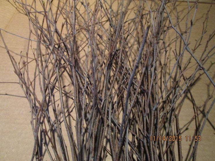 Tiny Birch Twigs- Decoration, Floral, Crafts!!