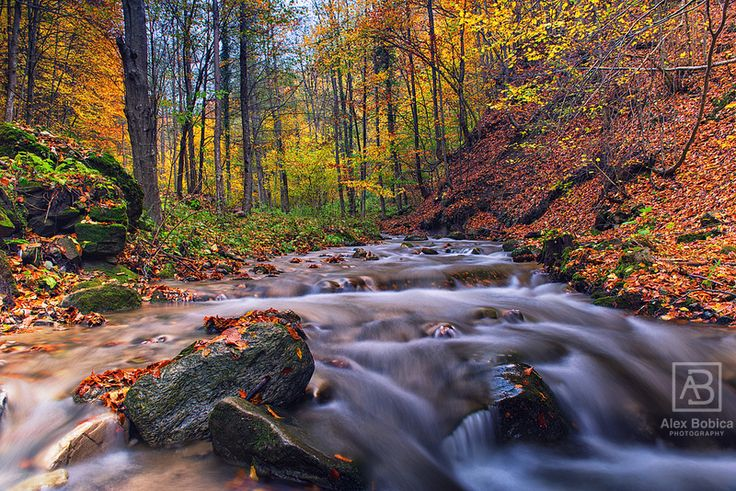 Fluid pastel #Romania #autumnal #autumn #Cozia #beauty #water #forest #alexbobica #photography