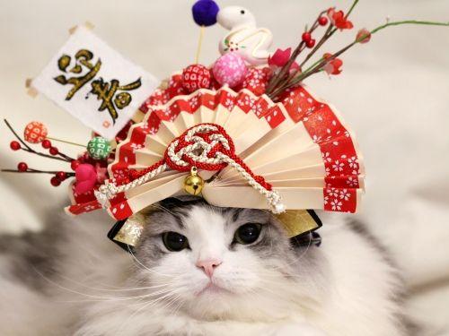haruさんのこてつのお正月2013 - 写真共有サービス 「写真部」 byGMO