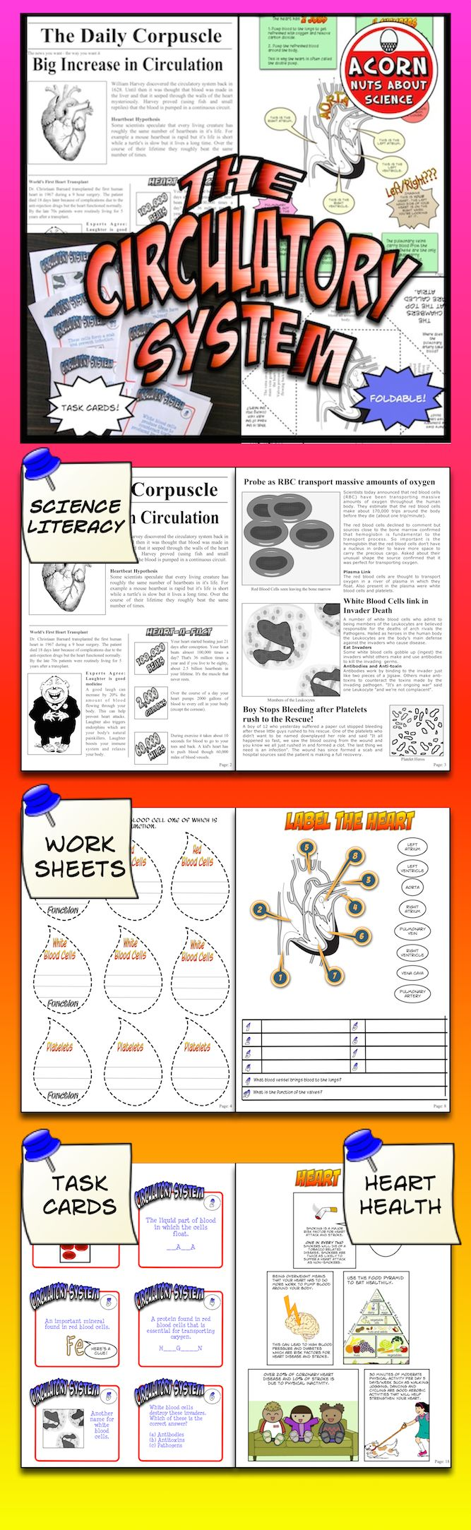worksheet Circulatory System Worksheets Kids 1000 ideas about circulatory system on pinterest this unit is packed with activities diagrams foldables worksheets circulatory