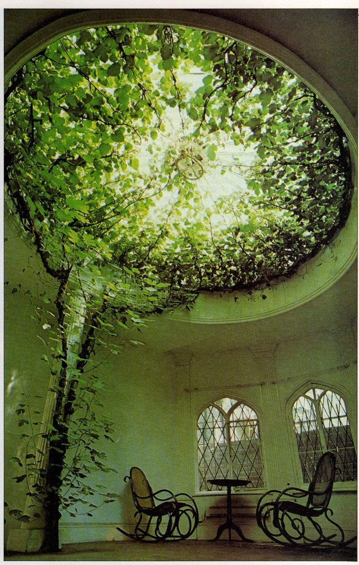 Ficus makes a breathtaking display of aerial greenery filling the glass dome of what was once a chapel.
