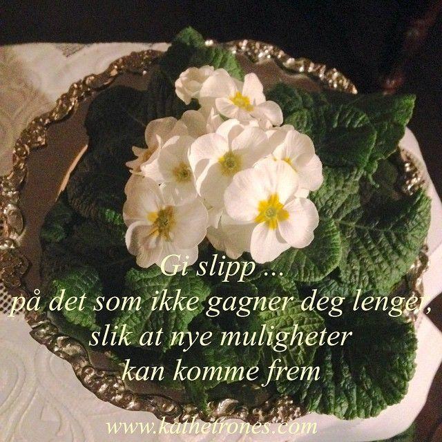 """""""Let go of what no longer serves you, so that new opportunities can come through✨#healing #love #light #lys #kjærlighet #blomster #blomstererhealing…"""""""