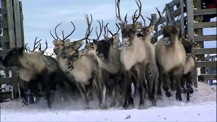 Lapland, North Finland < Visit Finland Video collections 7 [Lappi]