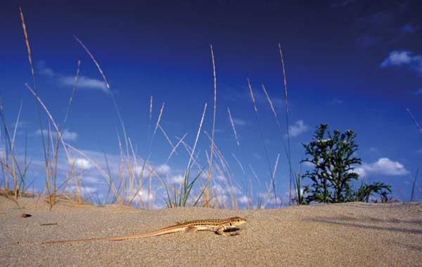 Siete (buenas) playas en la Costa Daurada http://www.costadoradatransfers.com/esp/