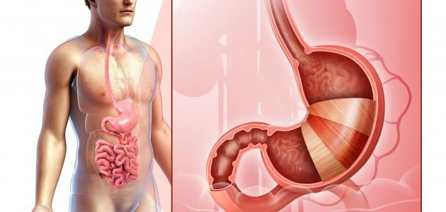 Do You Know How Digestive Gland In Your Stomach Gland Human Body Systems Human Digestive System