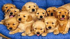 cute dog videos - YouTube