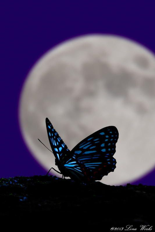 The Moon And Butterfly By Tomoaki Kabe Butterfly