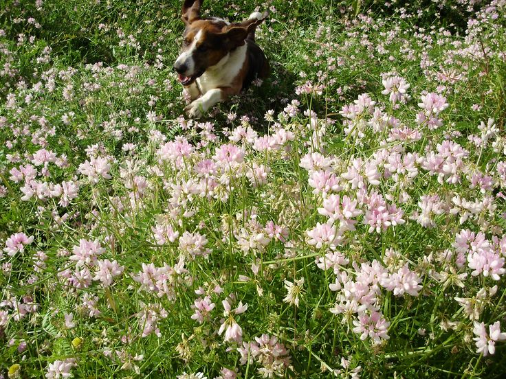 Fred encouraging people to get out and smell the flowers.