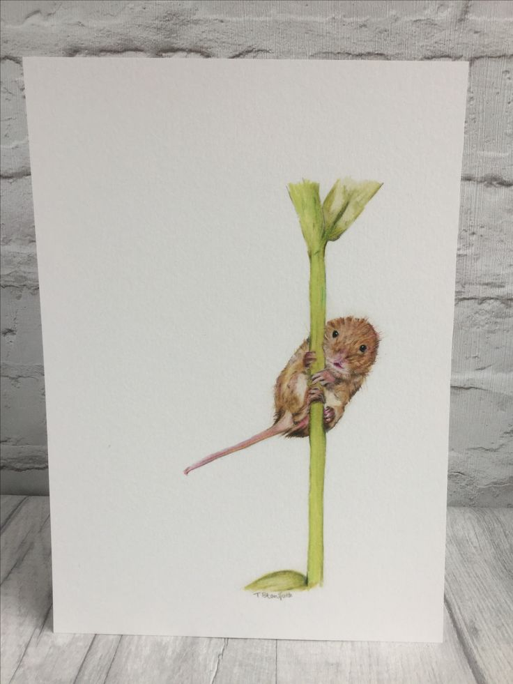 Harvest mouse fine art print by Norfolk artist Teresa Staniforth #harvestmouse #mouse # gicleeprint #colouredpencils