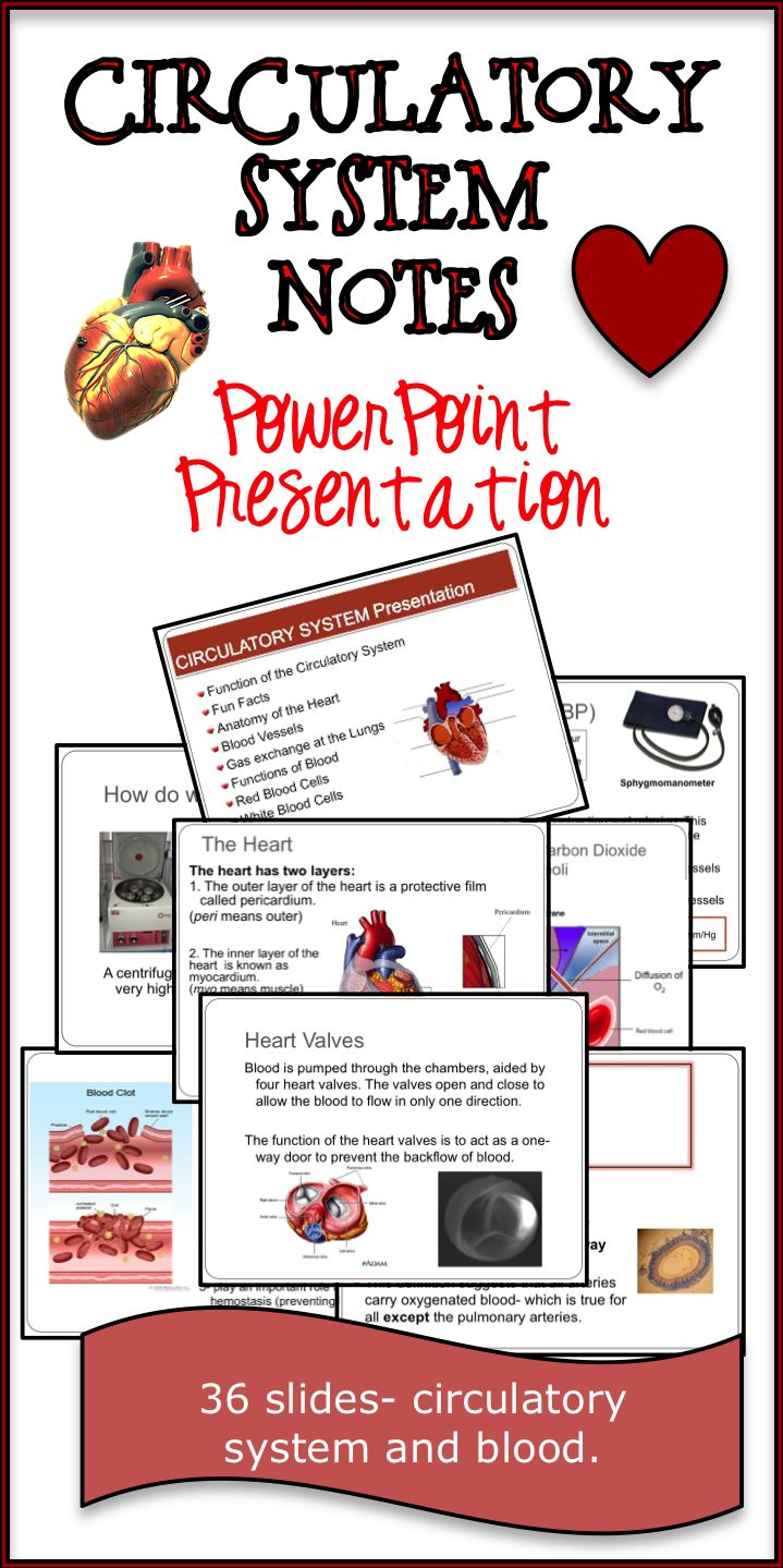 the 25 best circulatory system ideas on pinterest circulatory