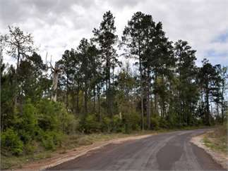 Colmesneil, Tyler County, Texas Land For Sale - 50 Acres