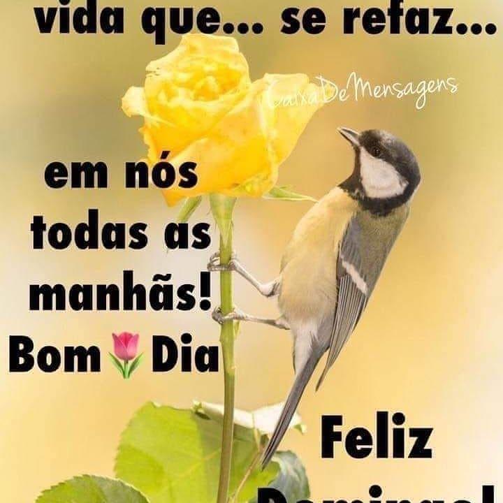 Imagem De Mensagens De Bom Dia Por Symone Oliveira Em Blog Da Sy