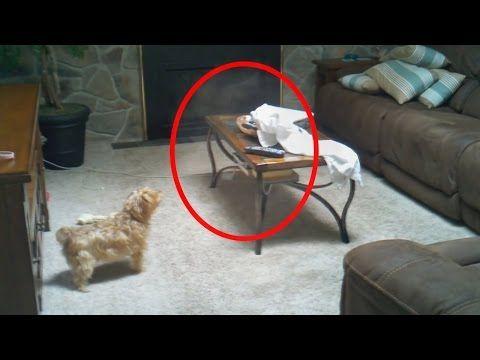 #Sobrenatural 5 Momentos Aterradores Que Las Mascotas Pueden Ver y Sus Dueños NO!: 5 Momentos Impactante Que Las Mascotas Pueden Ver y Sus…