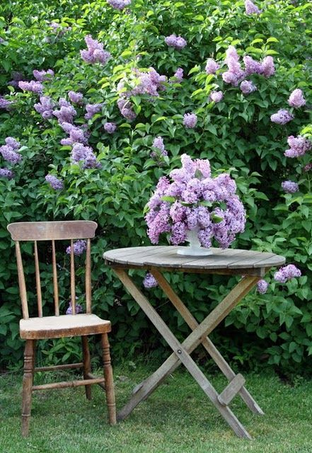 Pretty purpleChocolates Trifles, Gardens Ideas, Hiding Places, Growing Up, Country Farmhouse, Heavens Gardens, Wooden Tables, Flower, Lilac Bush