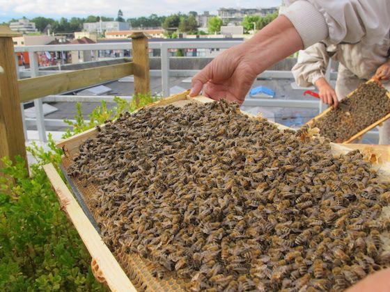 VPD bees