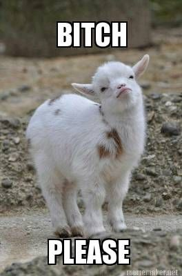 Group Of Funny Goat Sayings