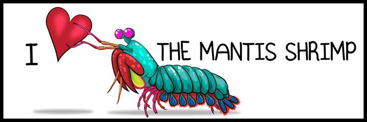 I ♥ The Mantis Shrimp - Bumper Sticker
