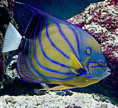 Tropische Vissen 23 Stock Foto - Beeld: 4524880