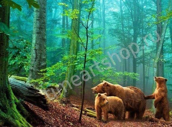Бурые медведи в лесу, картина раскраска по номерам, размер 40*50см, картины своими руками. 750 руб.
