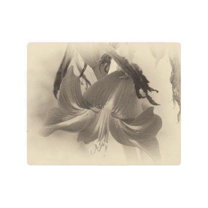 #Posters #Metal #Art - #Antique Amaryllis Flower Metal Photo Print