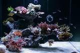 Reef Aquascaping on Pinterest   Reef Aquarium, Saltwater Tank and ...