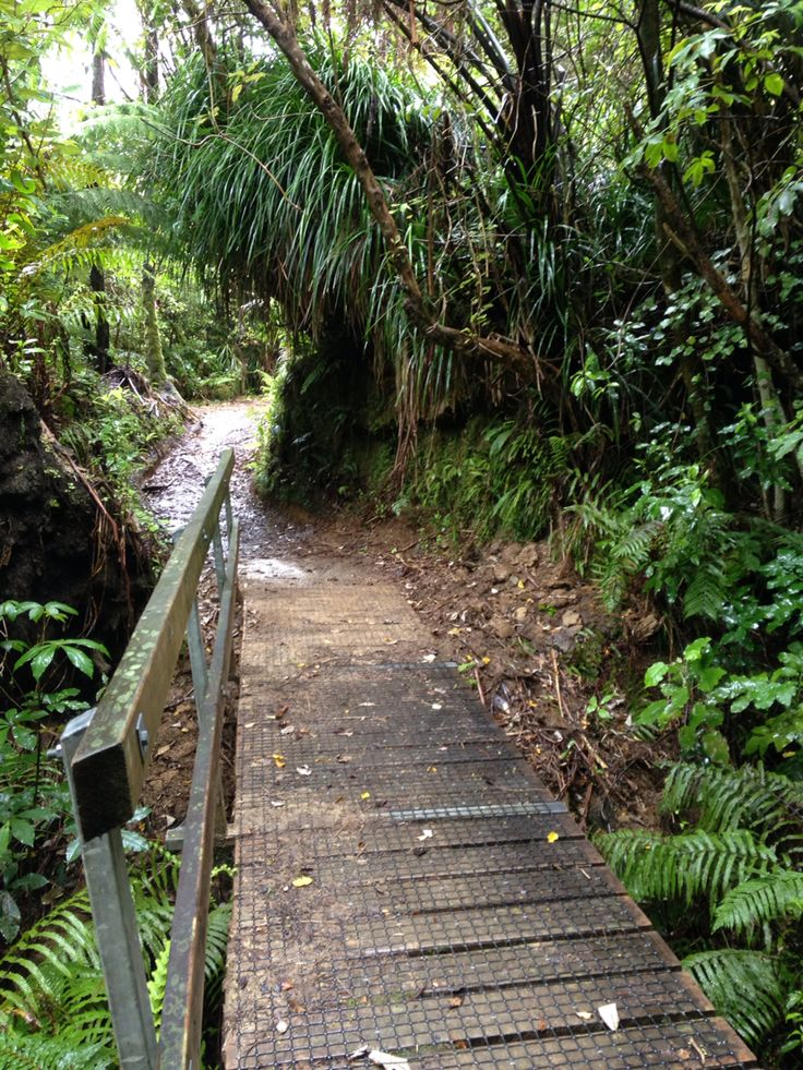 Day 1, Queen Charlotte Track out of Ship Cove...little bridges...little steps...little challenges....#wisewomenwalking #challenge #discover #fulfil