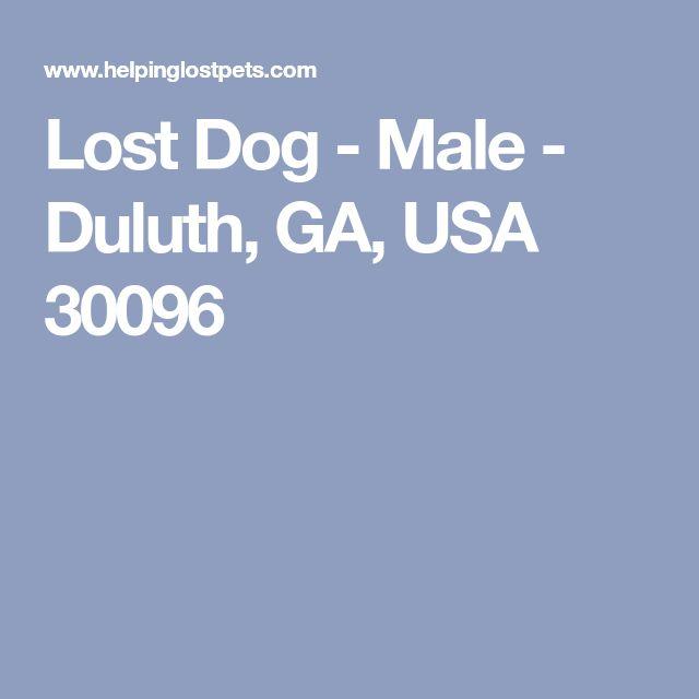 Lost Dog - Male - Duluth, GA, USA 30096