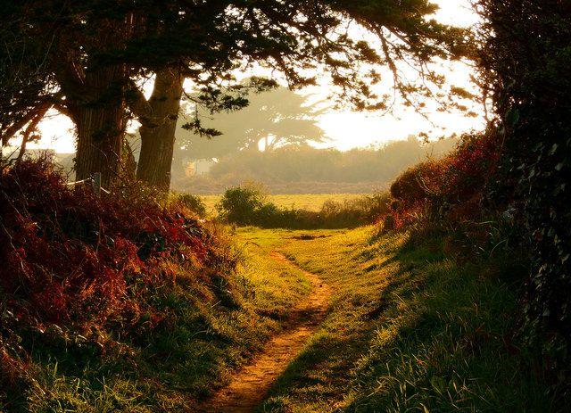 Photo : Le sentier lumineux, France, Paysages, Campagne, Chemins, Ploemeur. Toutes les photos de odette lefebvre sur L'Internaute
