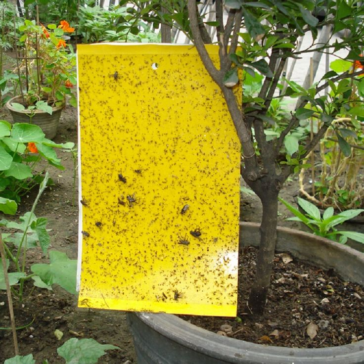 Insects Sticker Yellow Dual-sided Hanging Sticky Fly Pest Insect Catchers Bug Whitefly Aphid Gnat Traps Pest Control